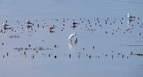 Egret web