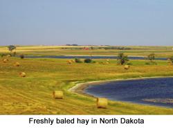 North Dakota web 2