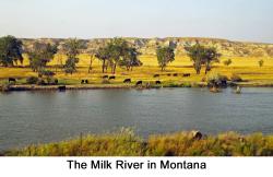 Montana web 2